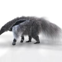 Anteater gi cover