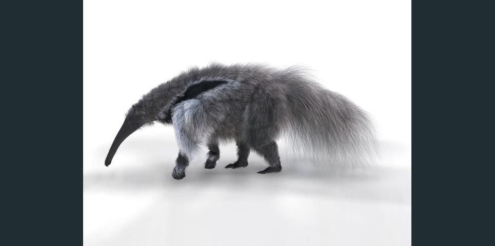 Anteater gi show