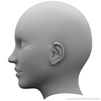 Human head reference picture right cover