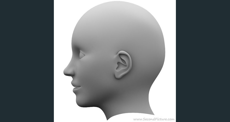 Human head reference picture right show