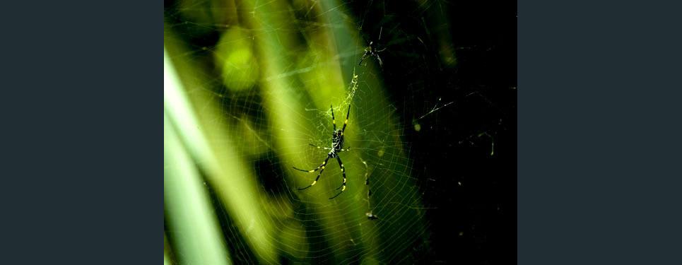 Spider2 show