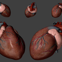 Heart specular cover