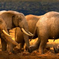 Elephants4 cover