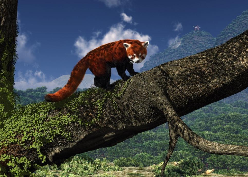 Red panda show