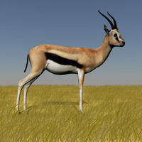Gazelle in wild cover