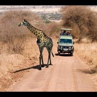 Giraffe2 cover