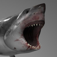 Shark beaut closeup cover
