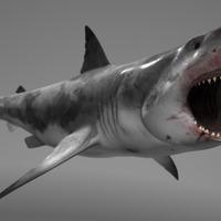 Shark beaut v02 cover