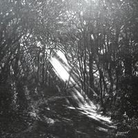 Sunbeams cover