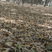 Dry leafs cover