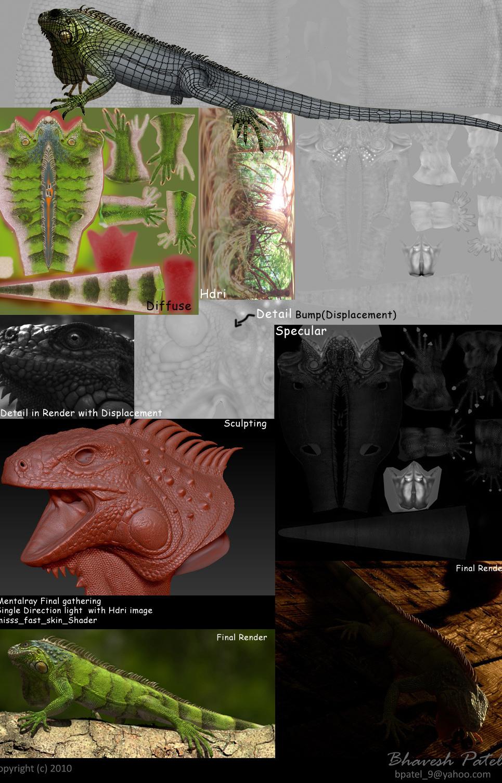 Making iguana show