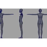 Asseion body wireframe small