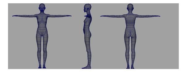 Asseion body wireframe wide