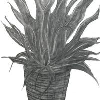 観葉植物 cover