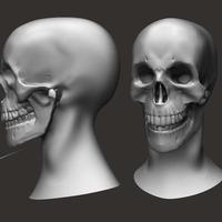 Skull render cover