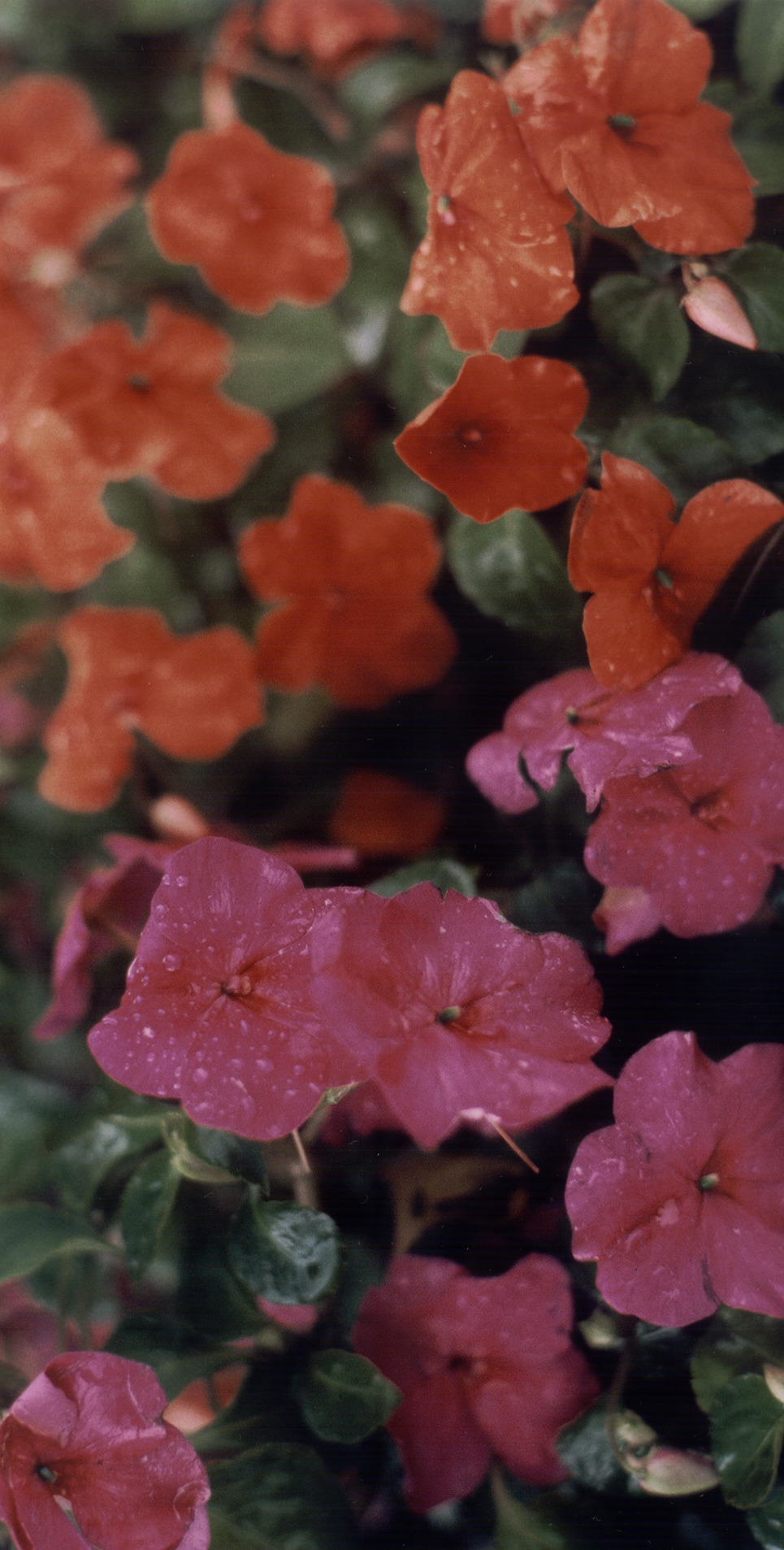 Flowers in the rain show