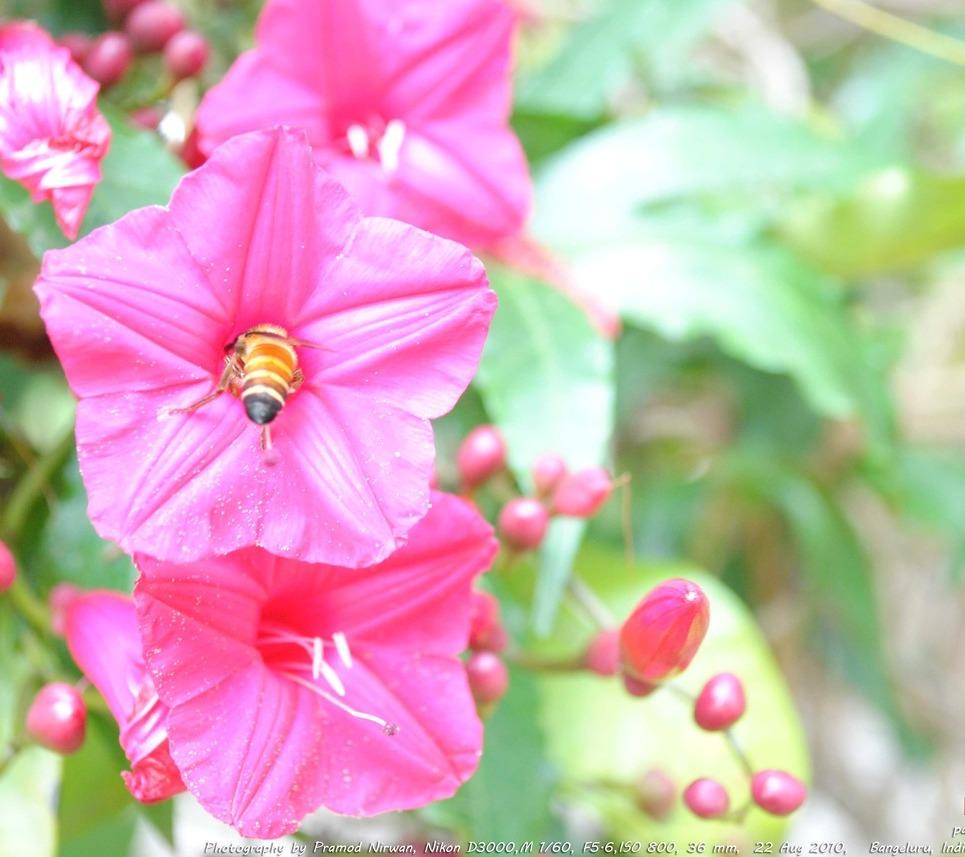 Pinkflower show