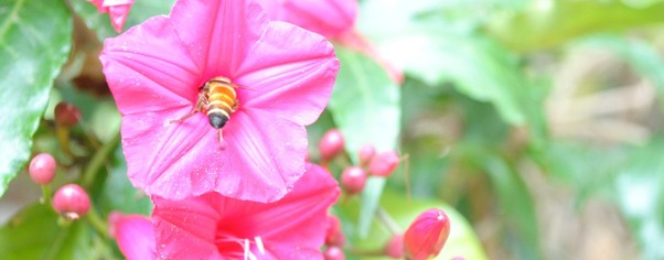Pinkflower wide