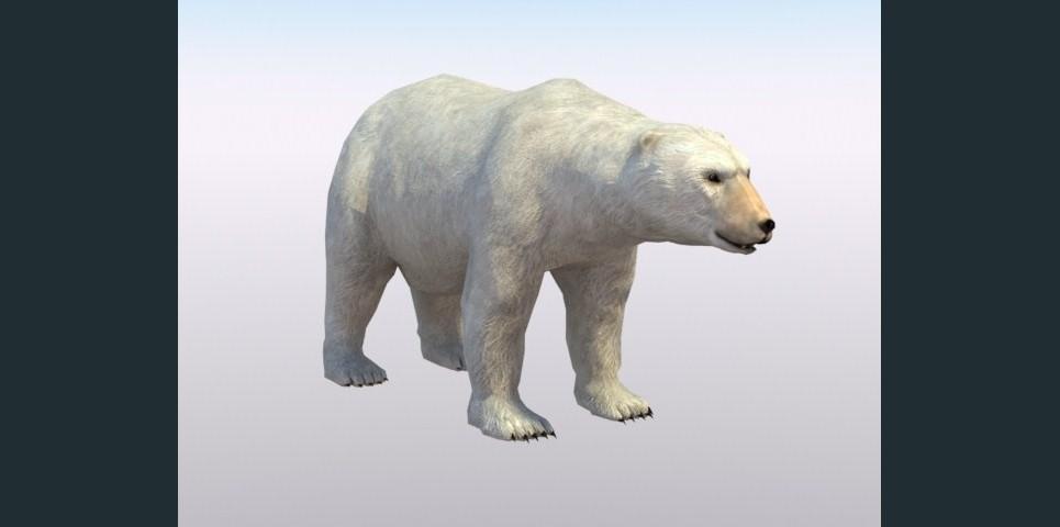 Dawntide polarbear show