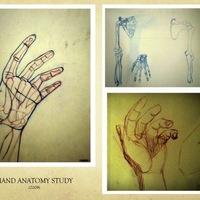 8 hand anatomy study cover