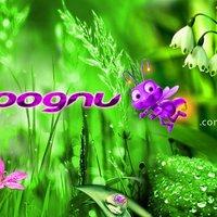 Joognu   nature cover