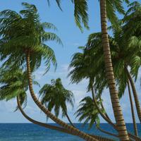 Hq palms logo 1 cover