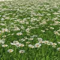 Scene daisy 1 cam 2 cover