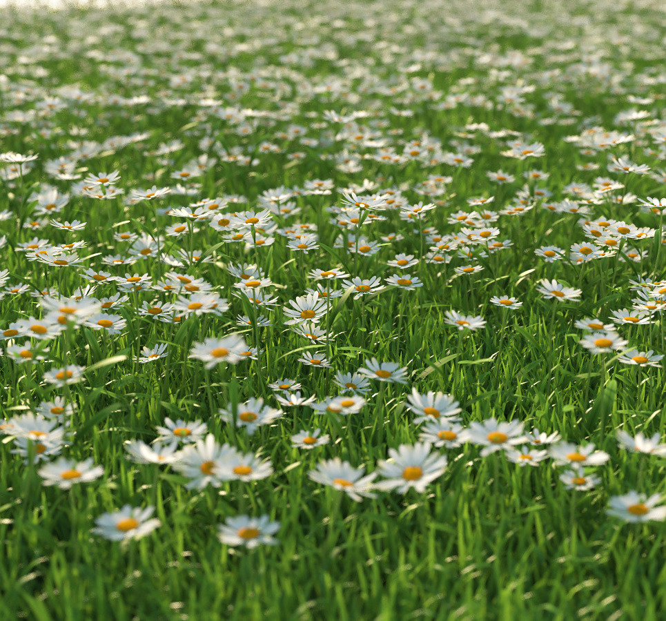 Scene daisy 1 cam 2 show