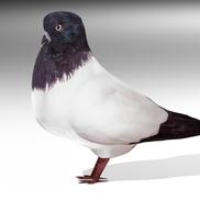 Dove3 small