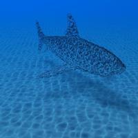 Shark 1 cover