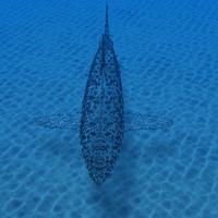 Shark 2 cover