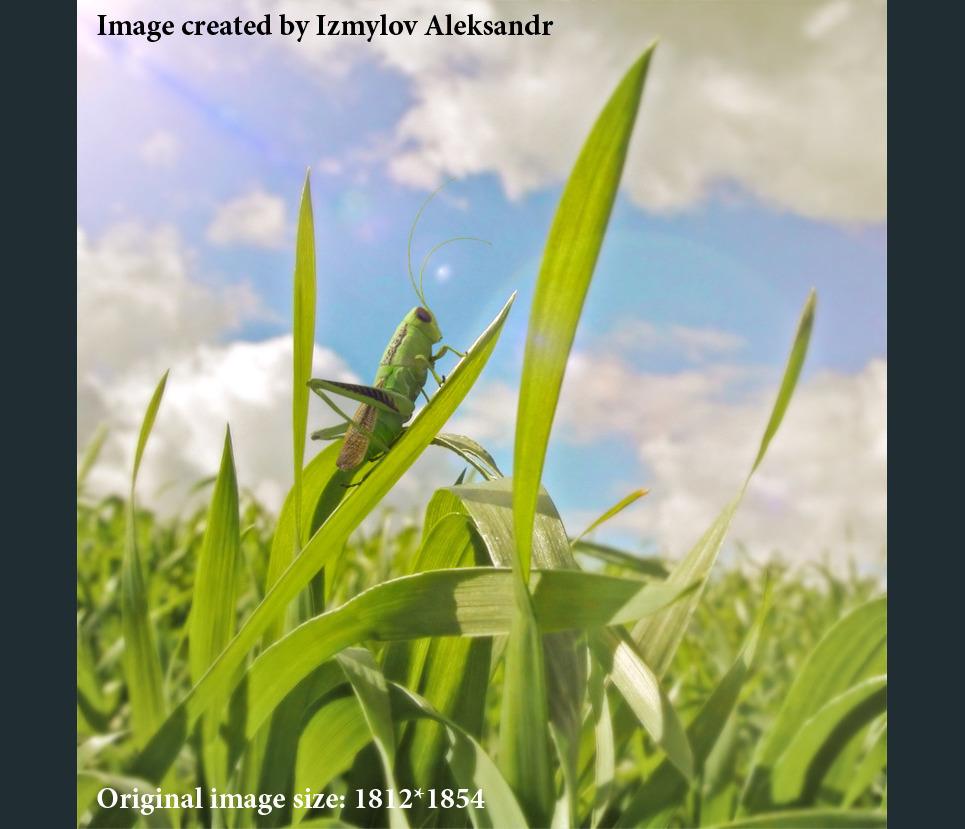 Grasshopper show