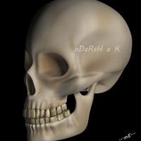 Skull 3  cover