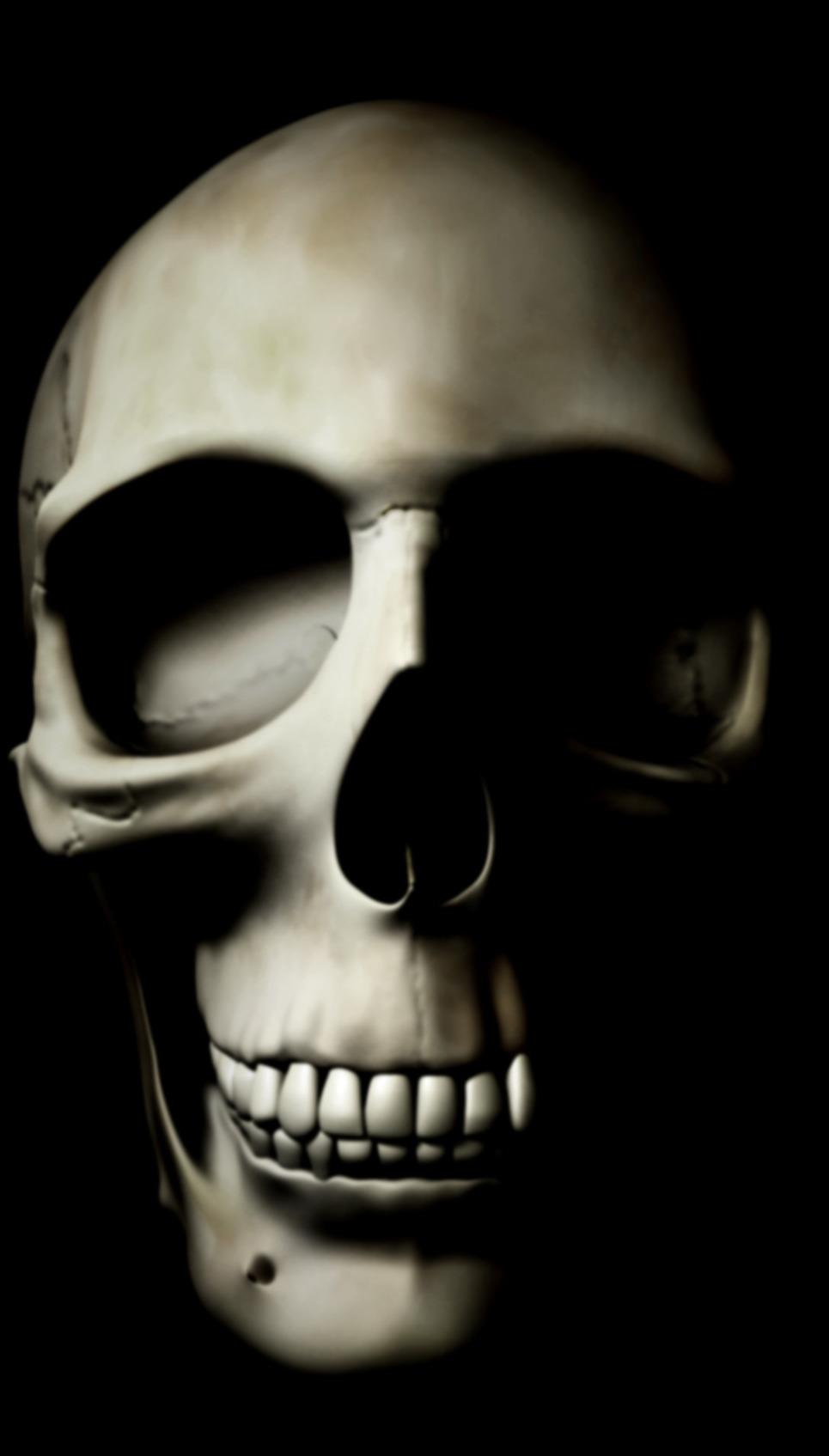 Craniul vedere frontala01 show
