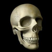 Craniul vedere semiprofil cover