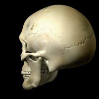 Skull225 cover