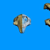 Rabbit skull cover