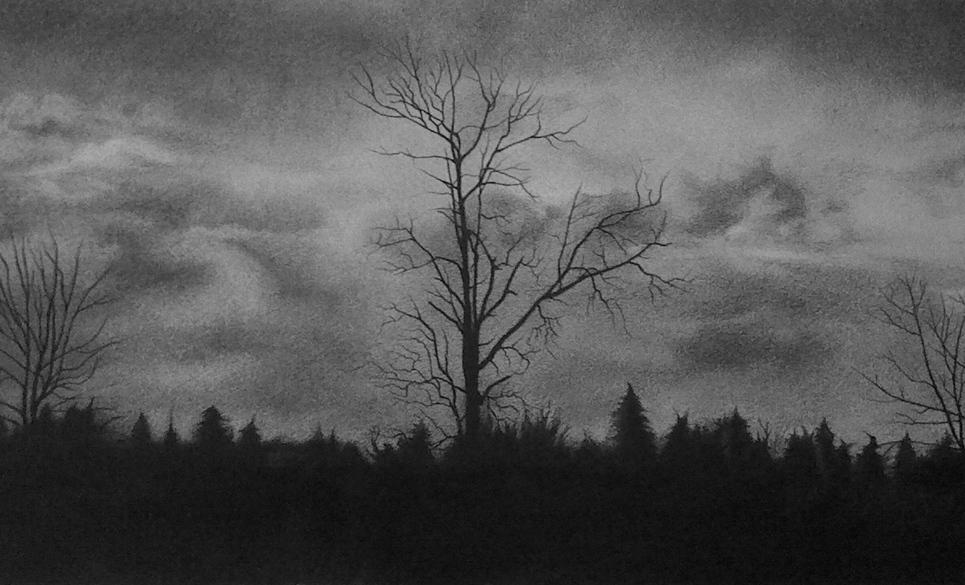 Tree silhouette show