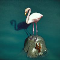 Flamingo lone cover
