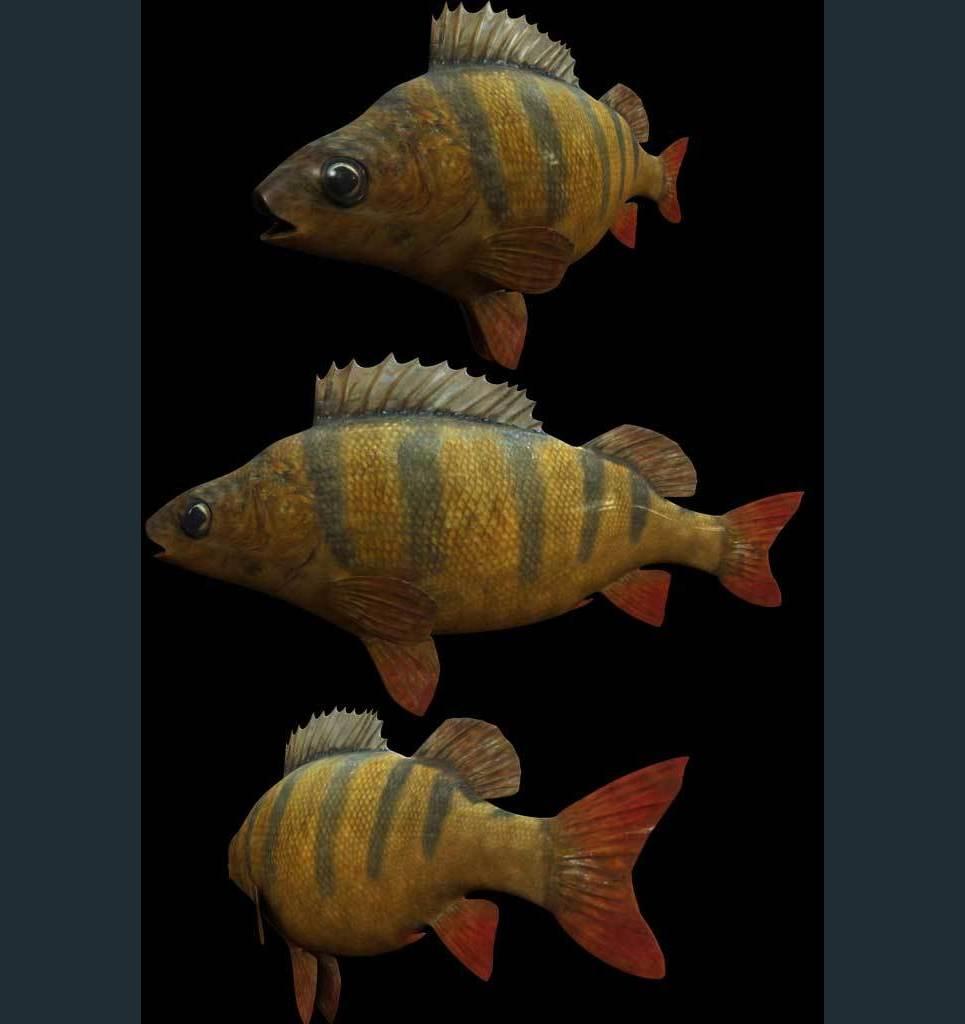 Fish show