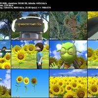 12 sun flower s cover