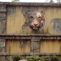 Tigerworld entre cover