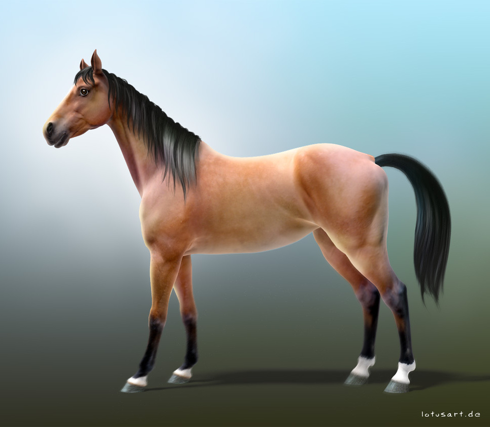 Horseimage show