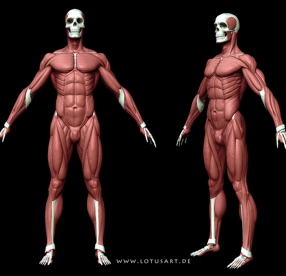 Anatomy1 show