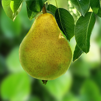 Pear cover