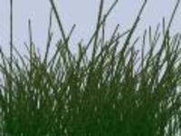 Free BigGrass for Maya 1.0