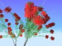 Free Callistemon Citrinus for Maya 0.2