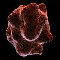 Free macrophageCell for Maya 1.0