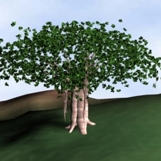Banyan Tree 3D Model