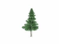 Coniferous 3D Model